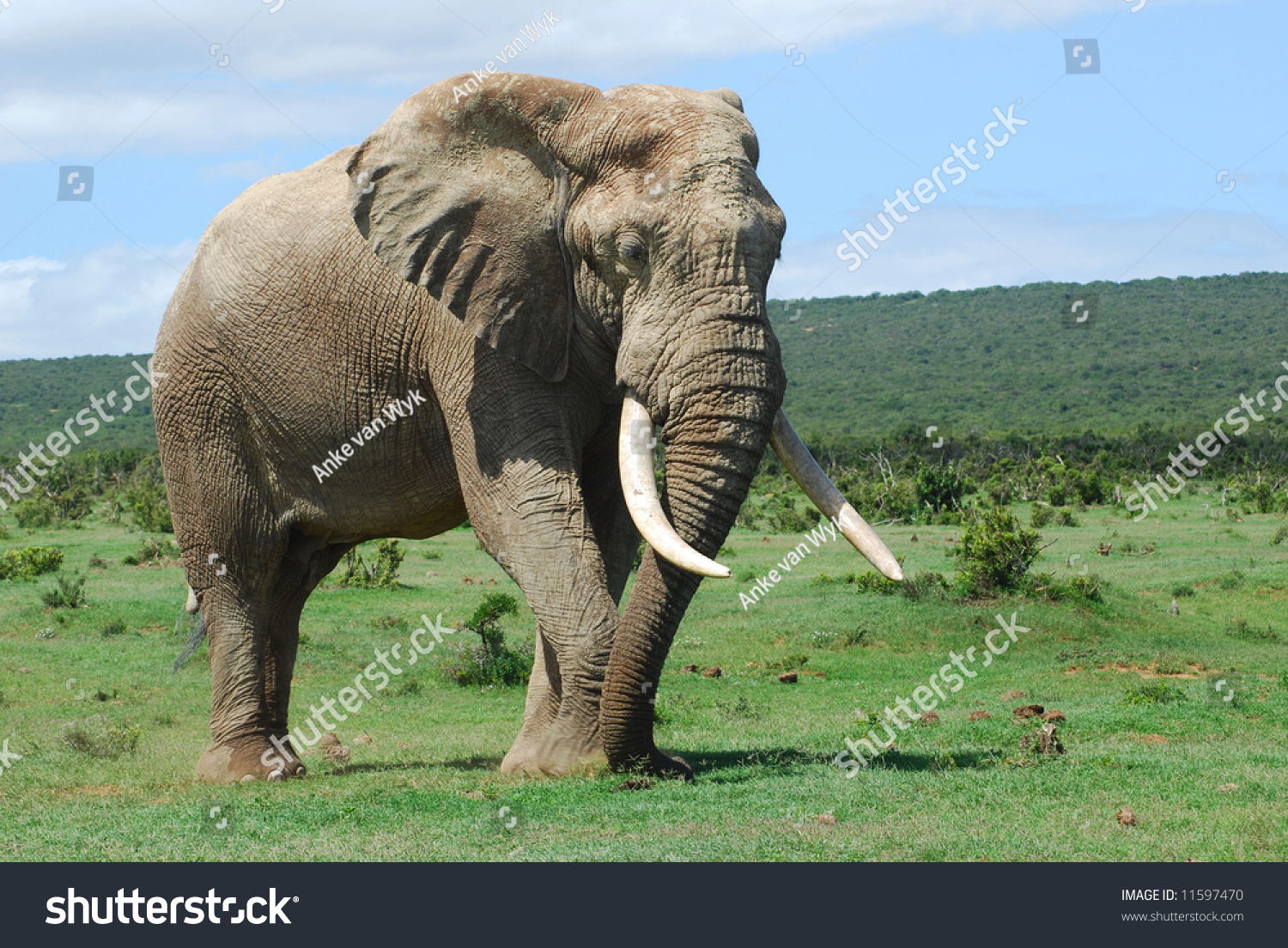 List Of Synonyms And Antonyms Of The Word Elephant Body