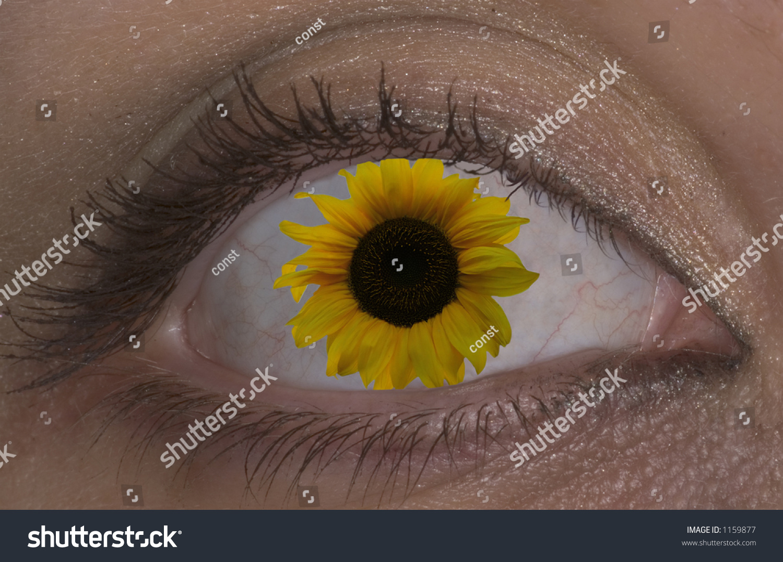 Flower Eye 6 Stock Photo Edit Now 1159877 Shutterstock