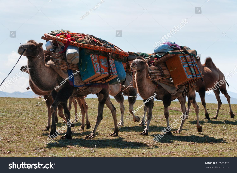 Original Arabian Camel Caravan A Camel Caravan In Oman