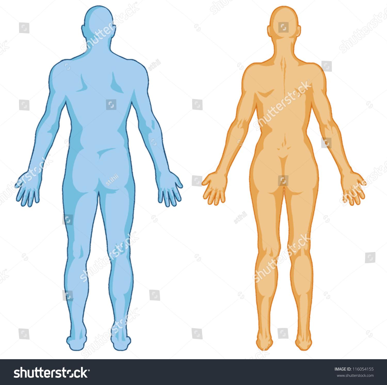Male Female Body Shapes Human Body Stock Photo Photo Vector