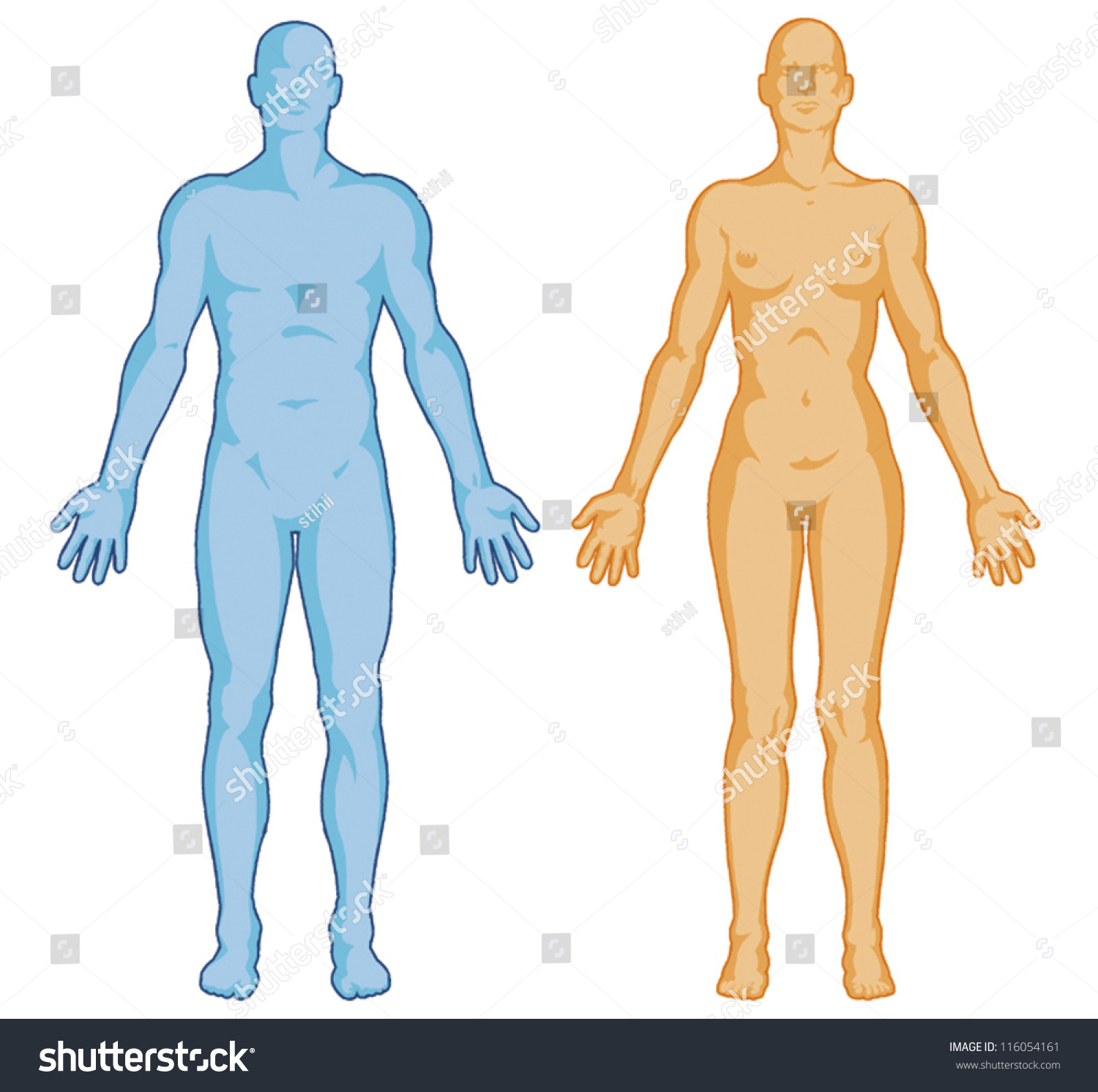 Female Male Body Shapes Human Body Stock Vector (Royalty Free ...