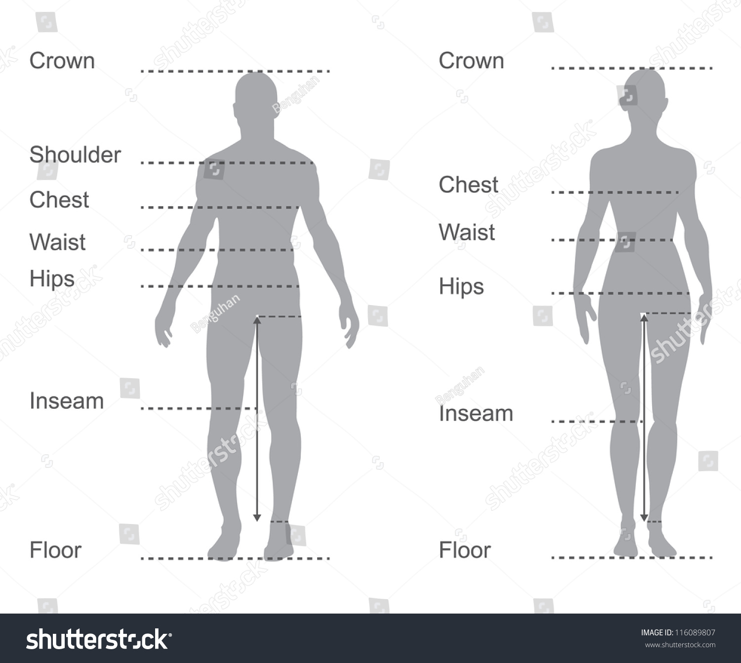 Size Chart Measurement Diagram Male Female Stock Vector (Royalty ...