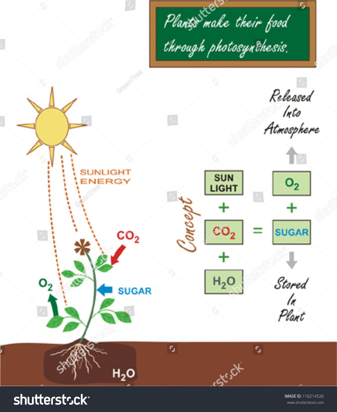 photsynthesis process