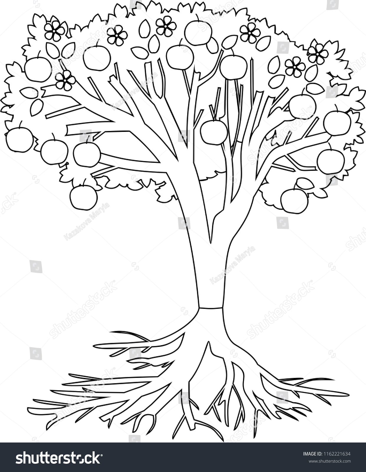 Coloring Page Apple Tree Root System Stock Vector Royalty Free