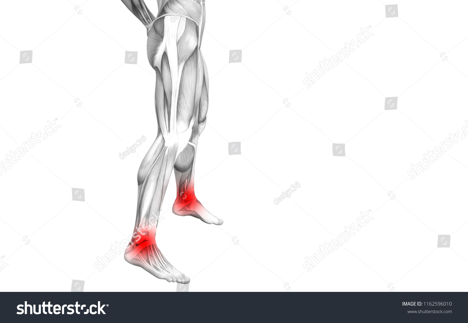Royalty Free Stock Illustration of Conceptual Ankle Human Anatomy ...