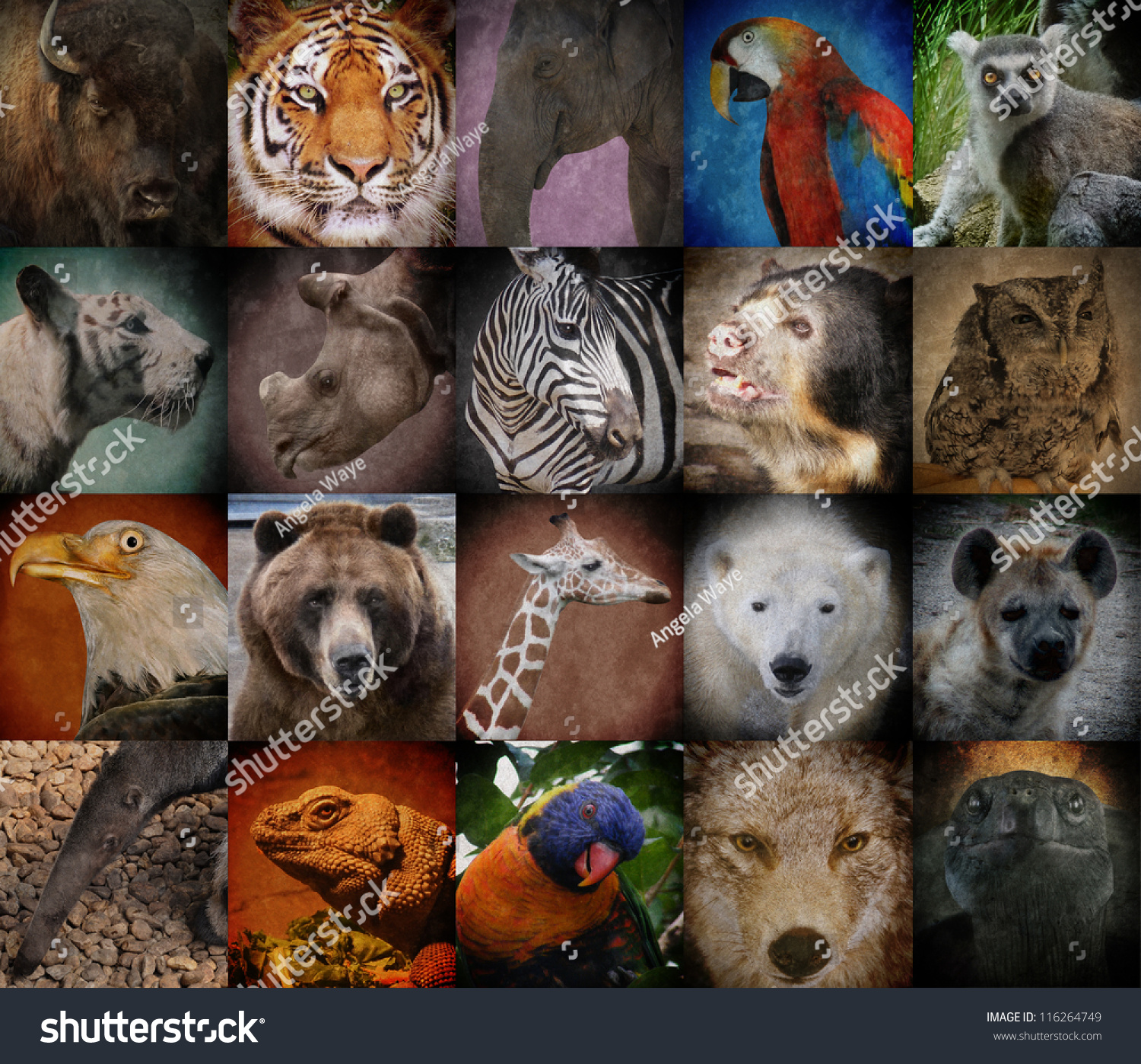 Image result for a group of different animals