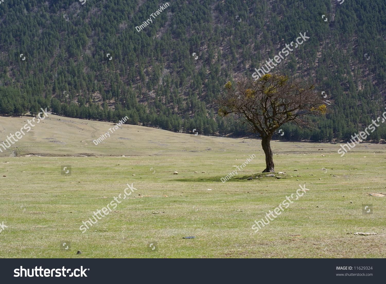 grassy asian singles Notable locations in grassy township: pine ridge camp (a), little grassy fish hatchery (b) 21 single-parent households (4 men, 17 women.