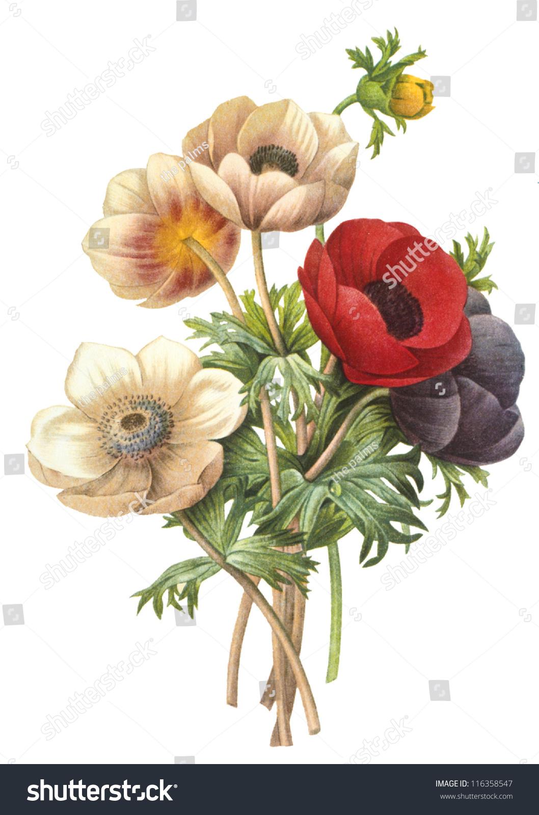 Flower Illustration Stock Shutterstock