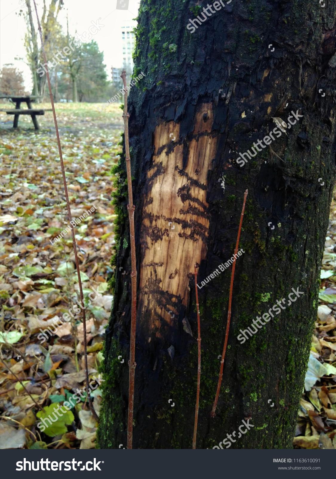 skoger dating steder)