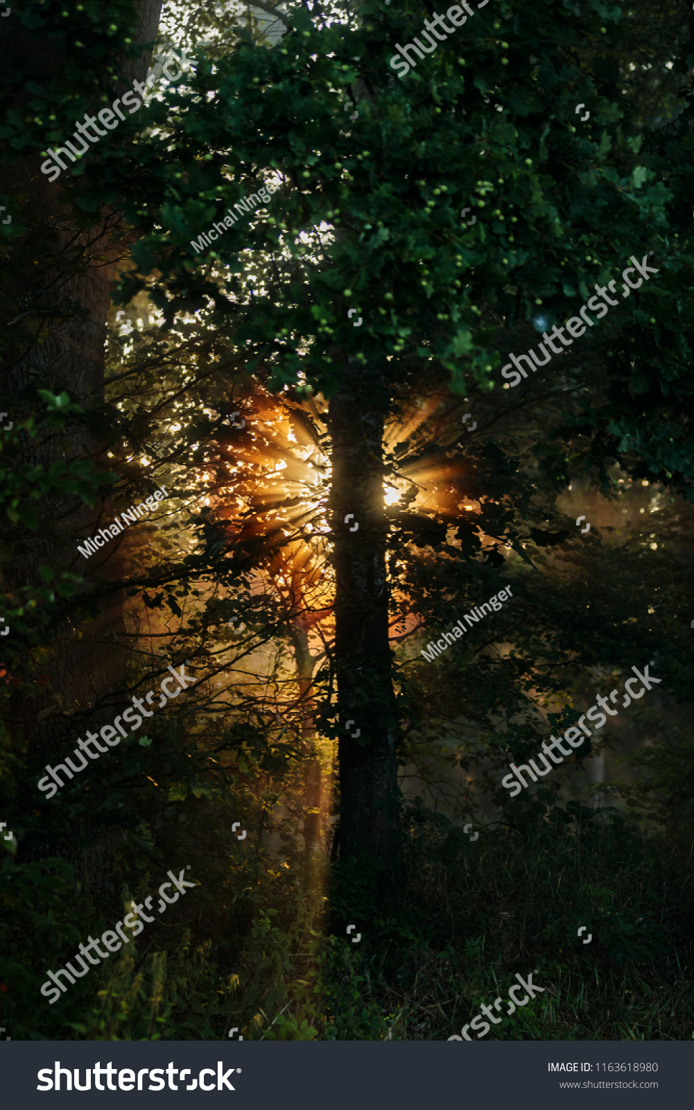 sun rise above river behinde tree
