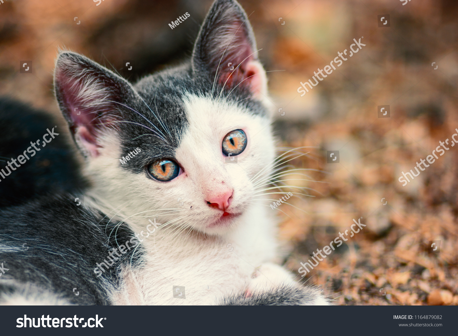 stock-photo-cyte-kitty-face-looking-at-c