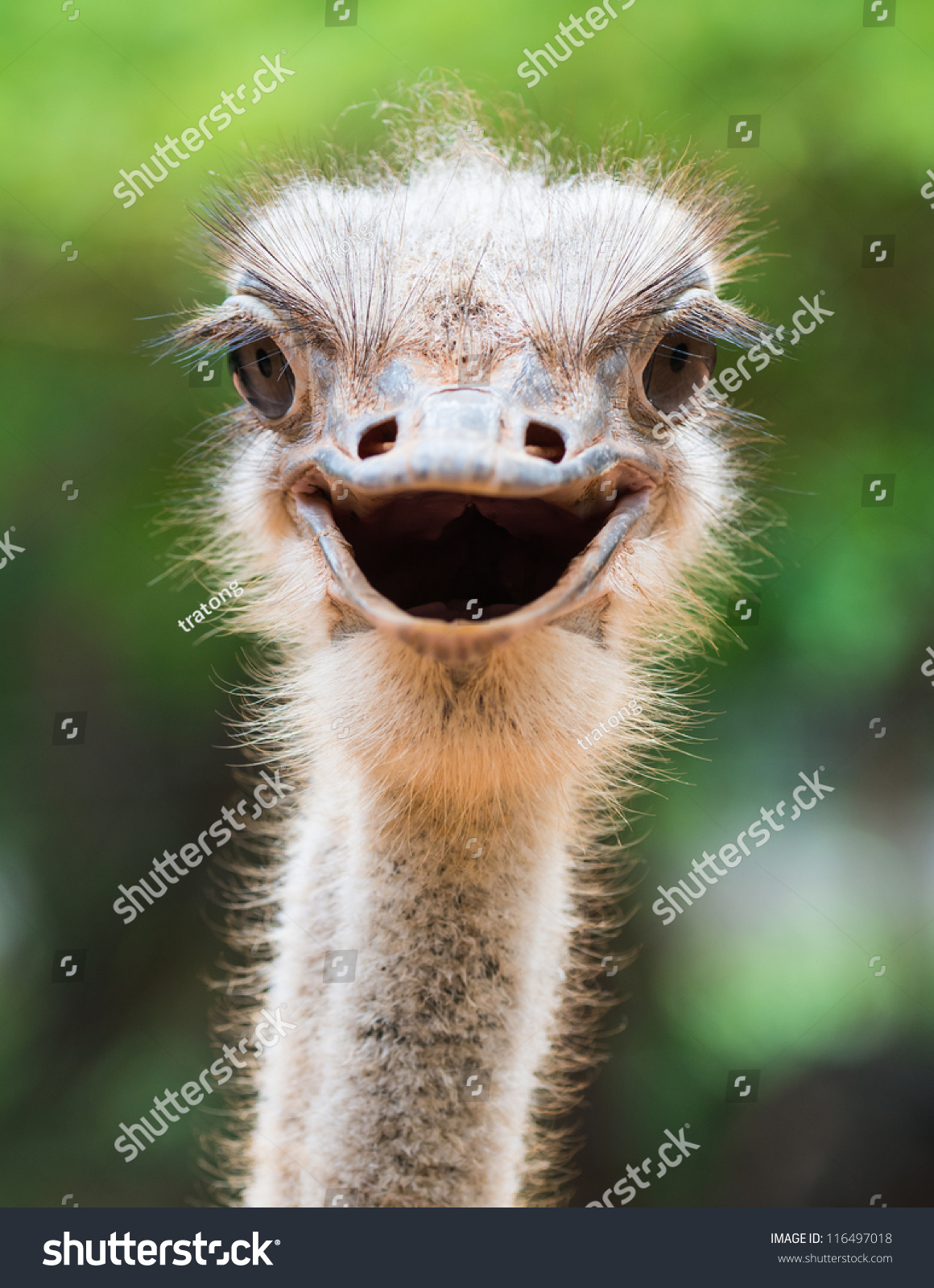 Funny animals smiling