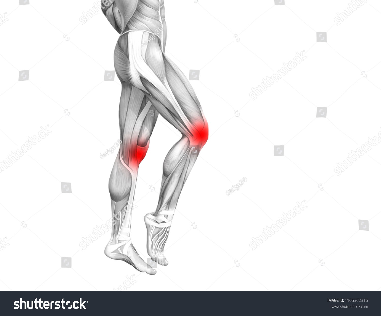 Conceptual Knee Human Anatomy Red Hot Stock Illustration 1165362316 ...