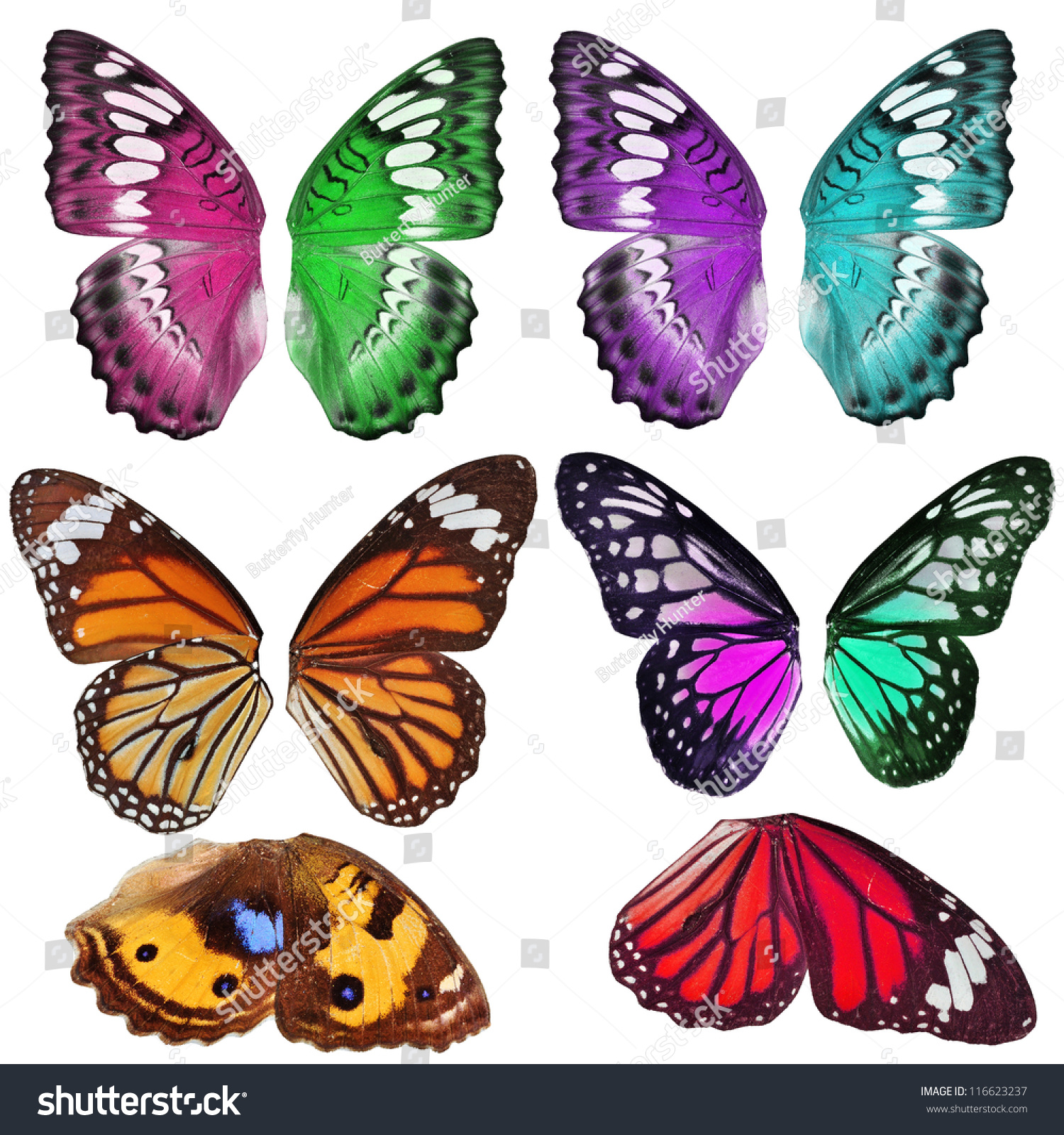 Many Colorful Butterfly Wing Isolated On Stock Photo ...