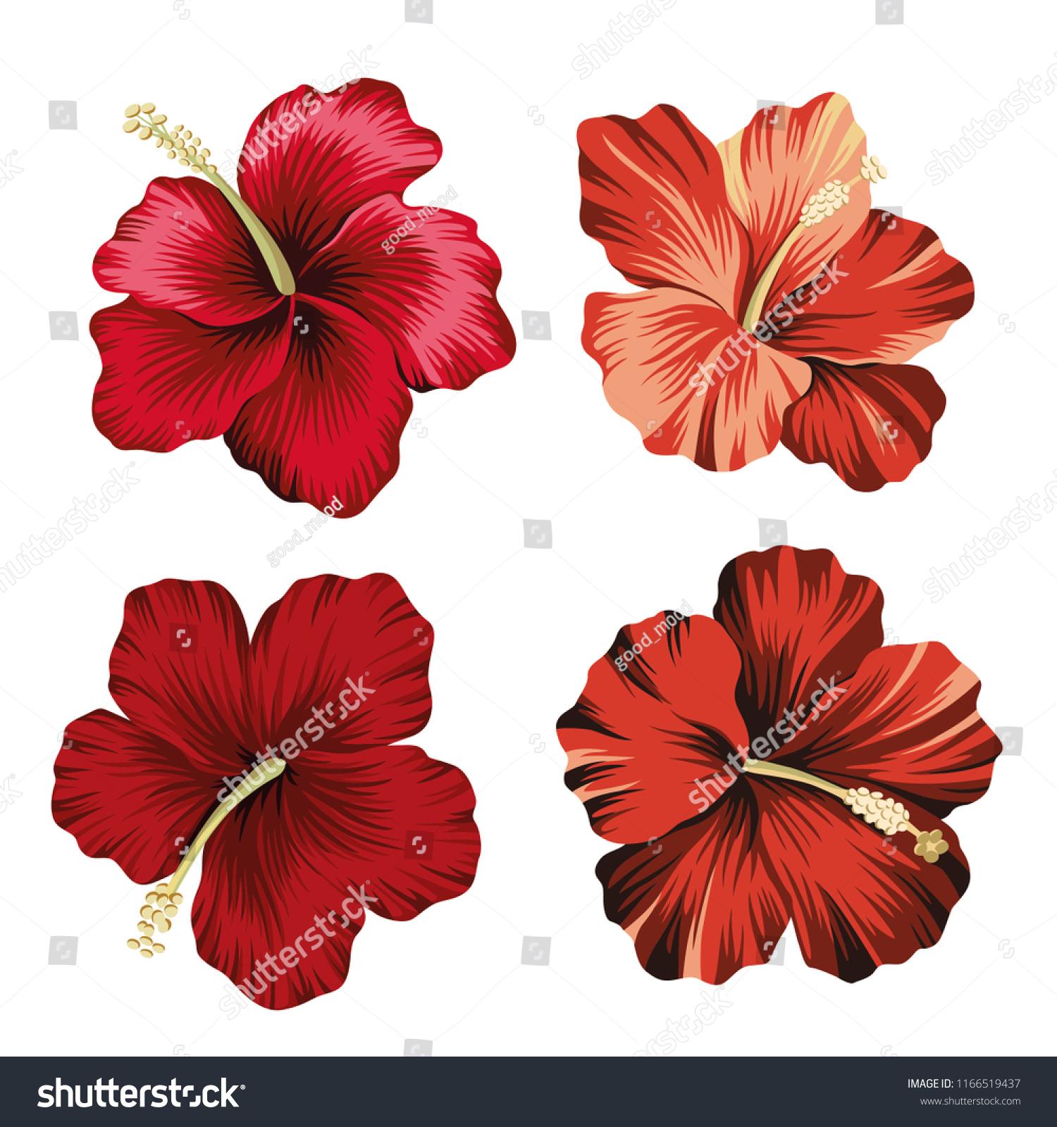 Vintage hawaiian flower clipart topsimages stock vector tropical vintage hibiscus flower clip art exotic floral botanical print jpg 1500x1600 vintage hawaiian izmirmasajfo