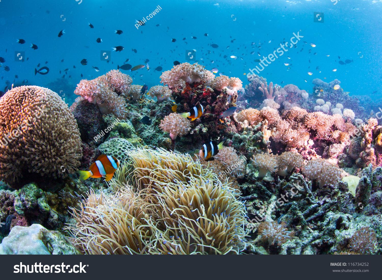 Underwater Reef Scape ...