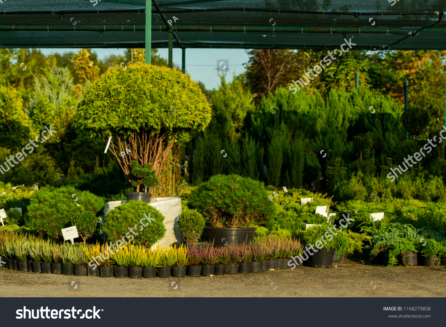 Bushes Tubs Sale Stock Photo (Edit Now) 1168279858 - Shutterstock