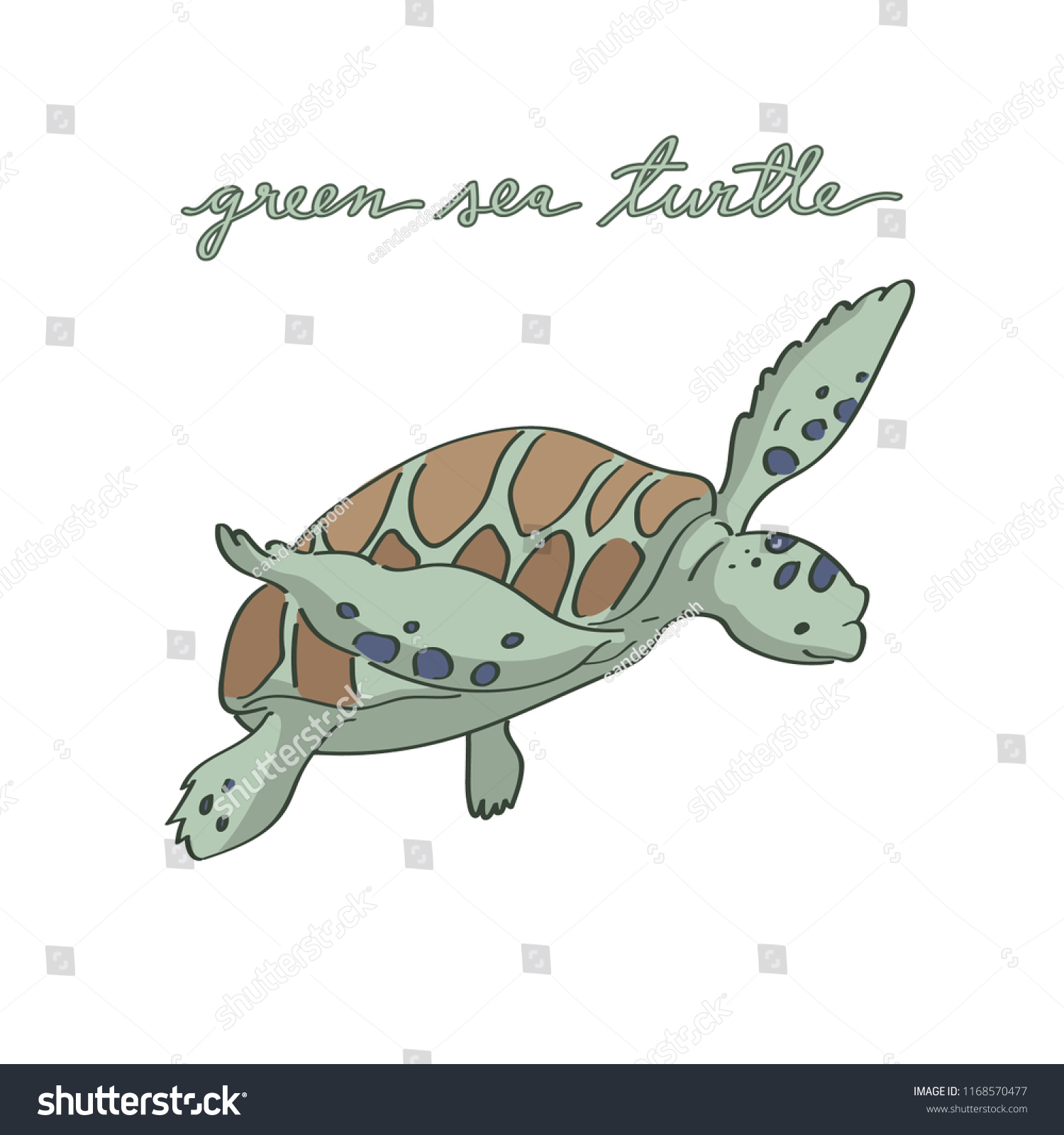 Cute Baby Green Sea Turtle Illustration Stock Vector Royalty Free