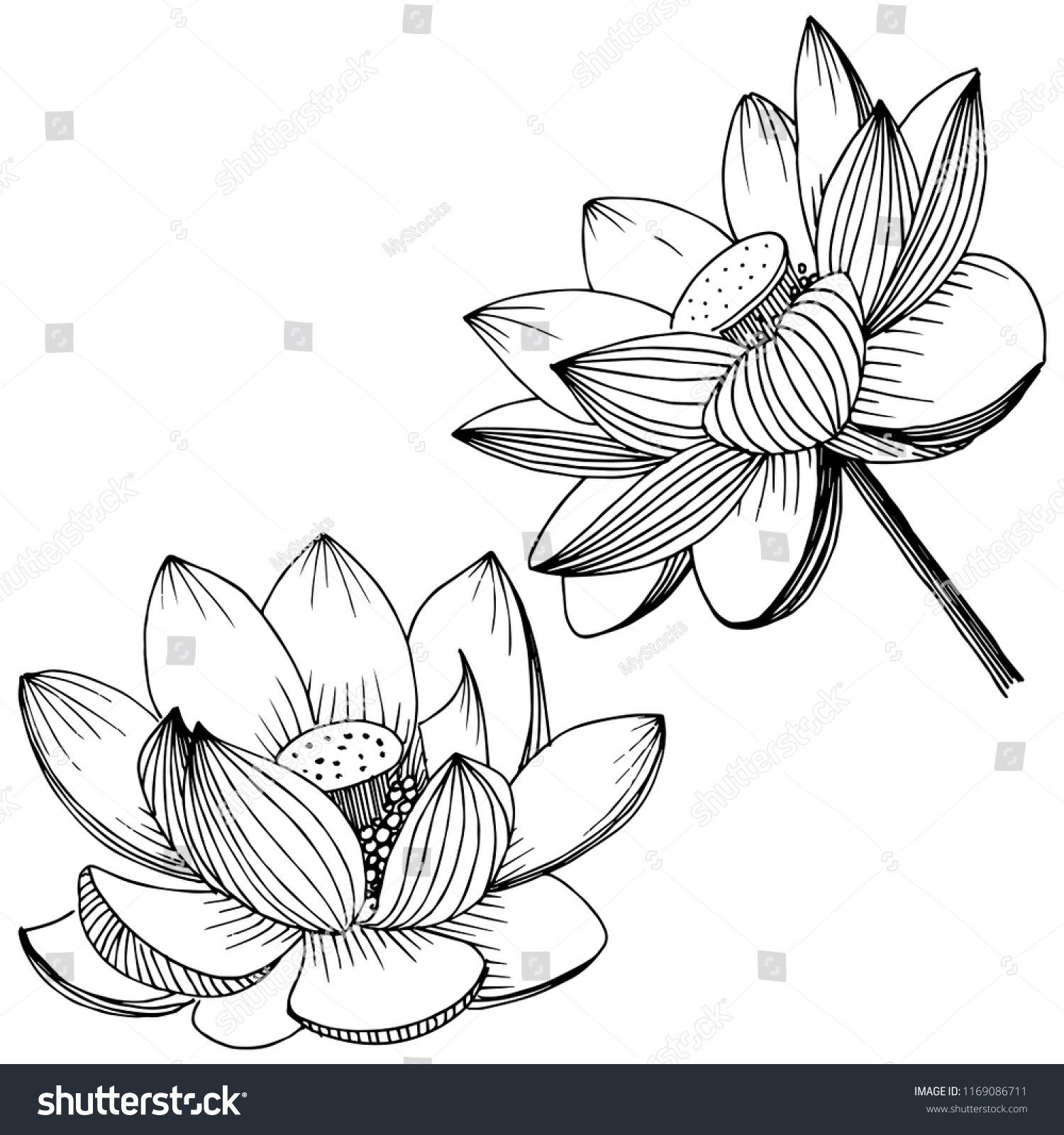 Ink Pencil The Leaves And Flowers Of Lotus Isolate Line Art