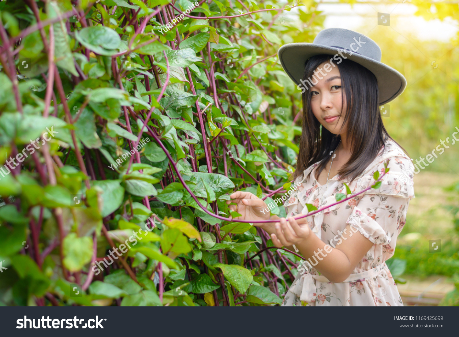 A woman portrait wearing a flower dress with gray retro hat and show the  Malabar spinach 852a18b93f97