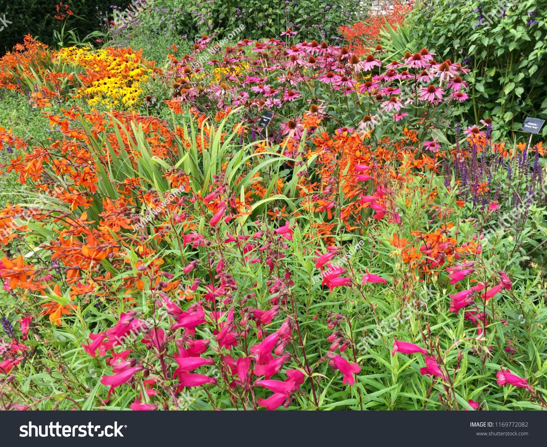 Colourful Cottage Garden Perennial Flower Border Stock Photo Edit