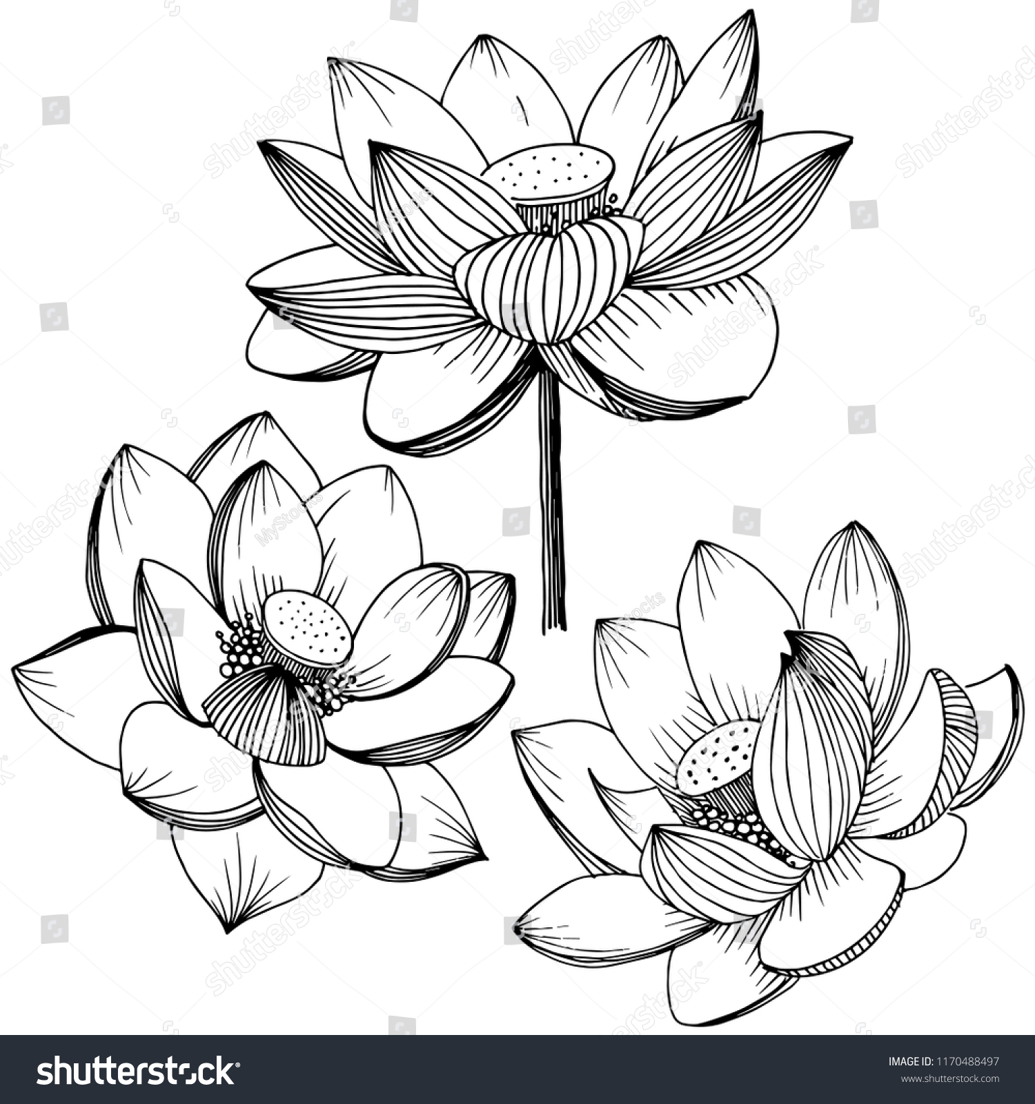 Water Lily Hand Drawn Ink Illustration Vector Ez Canvas