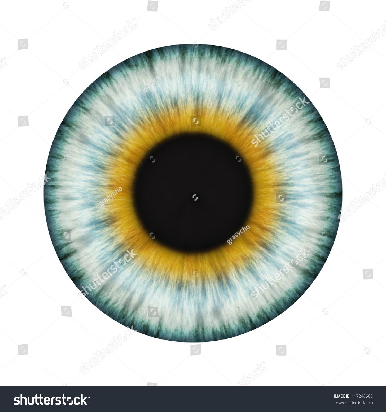 Detailed Realistic Eye Texture Stock Photo 117246685 ...