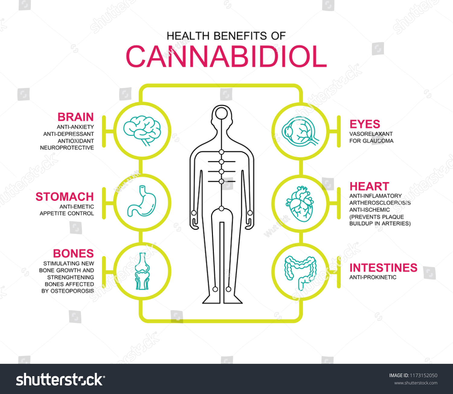 health benefits cannabiol stock vector royalty free 1173152050