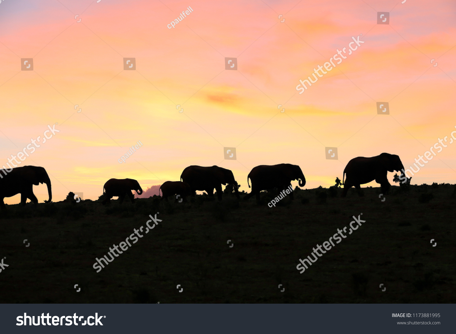 stock-photo-african-elephant-in-the-wild