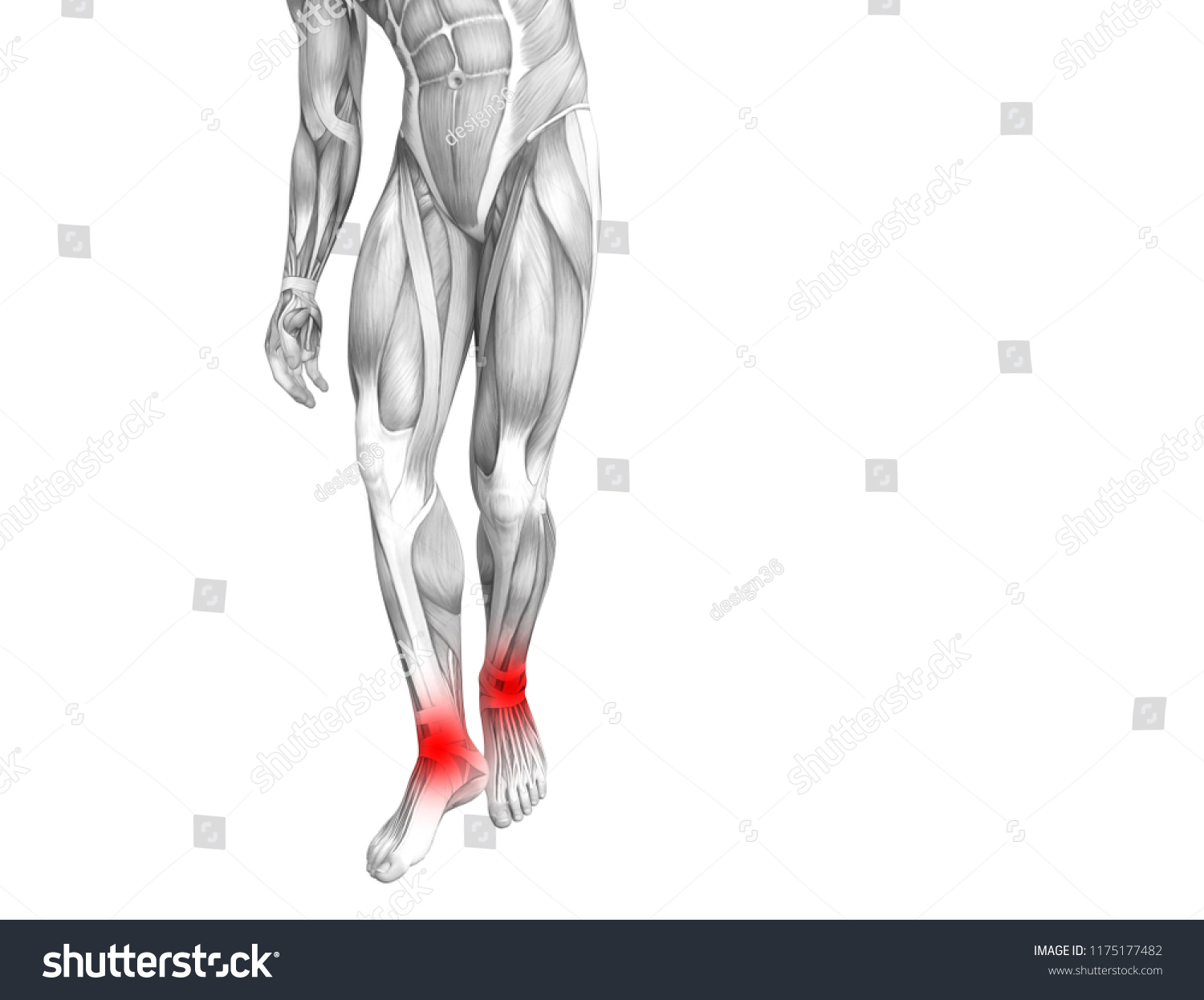 Conceptual Ankle Human Anatomy Red Hot Stock Illustration - Royalty ...
