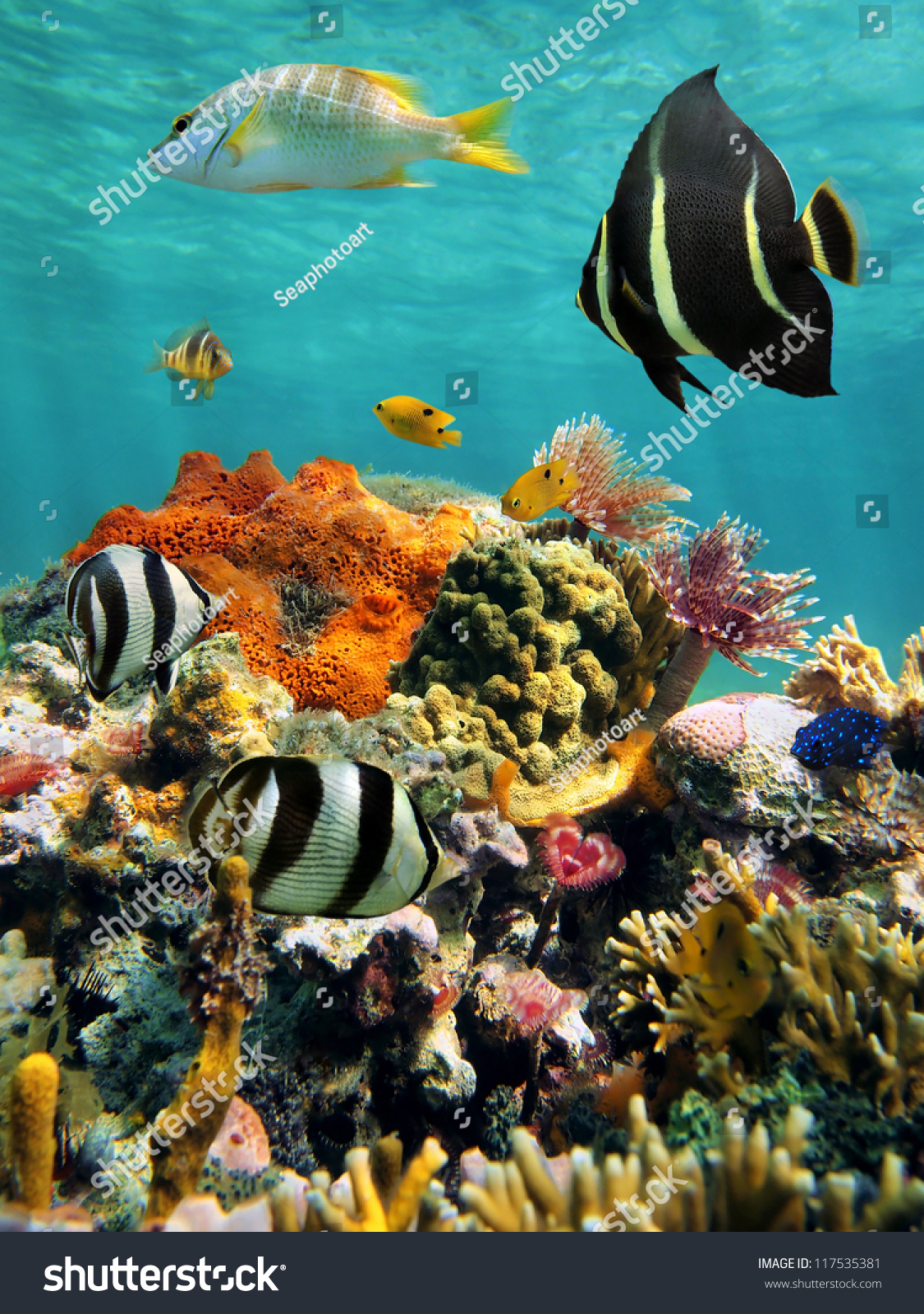 Colorful Underwater Marine Life In A Coral Reef With Water