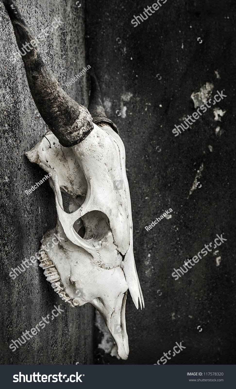 grunge bull skull stock photo 117578320 shutterstock
