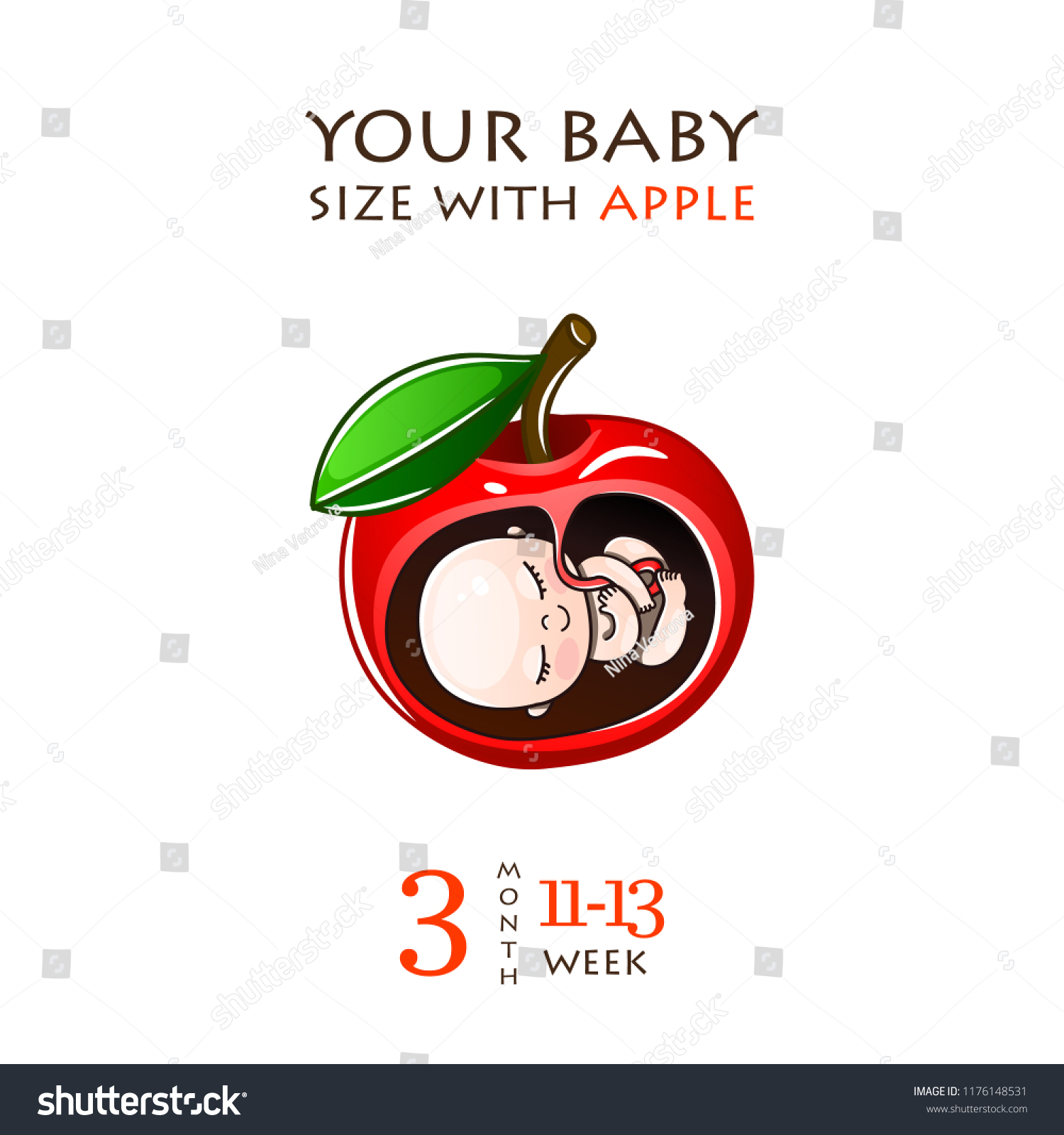 Stages Development Pregnancy Size Embryo Weeks Stock Vector
