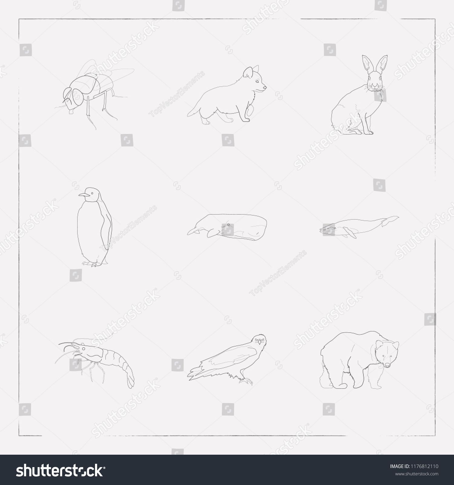 Set Zoology Icons Line Style Symbols Stock Vector Royalty Free Schematic Together With On Eagle Of Bear Puppy And Other