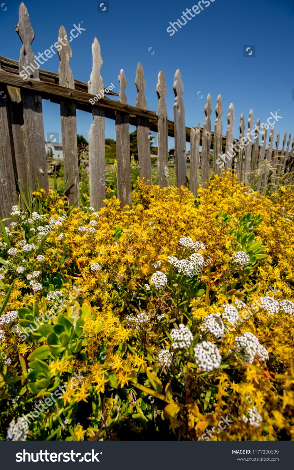 Flower Garden Along Side Vintage Unpainted Stock Photo Edit Now 1177300699