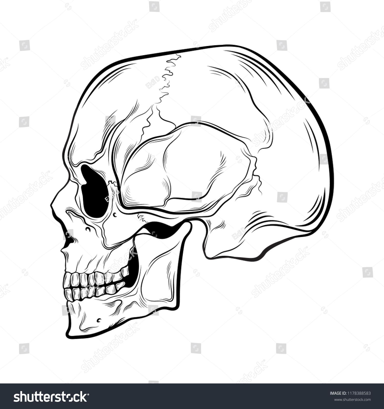 Black Human Skull On White Background Stockvector Rechtenvrij