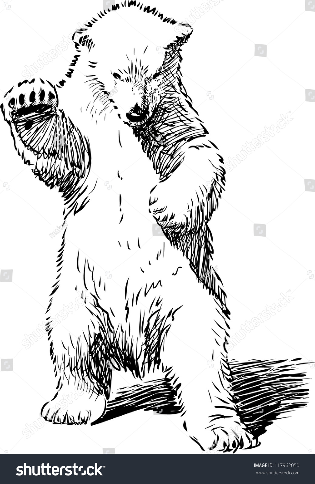 angry bear standing drawing - photo #40