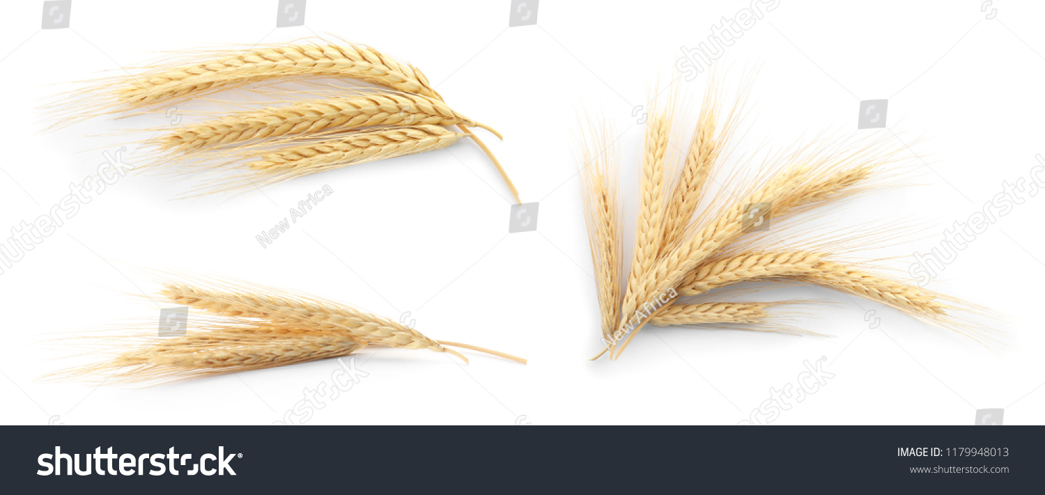 Set with spikelets on white background. Cereal grains #1179948013