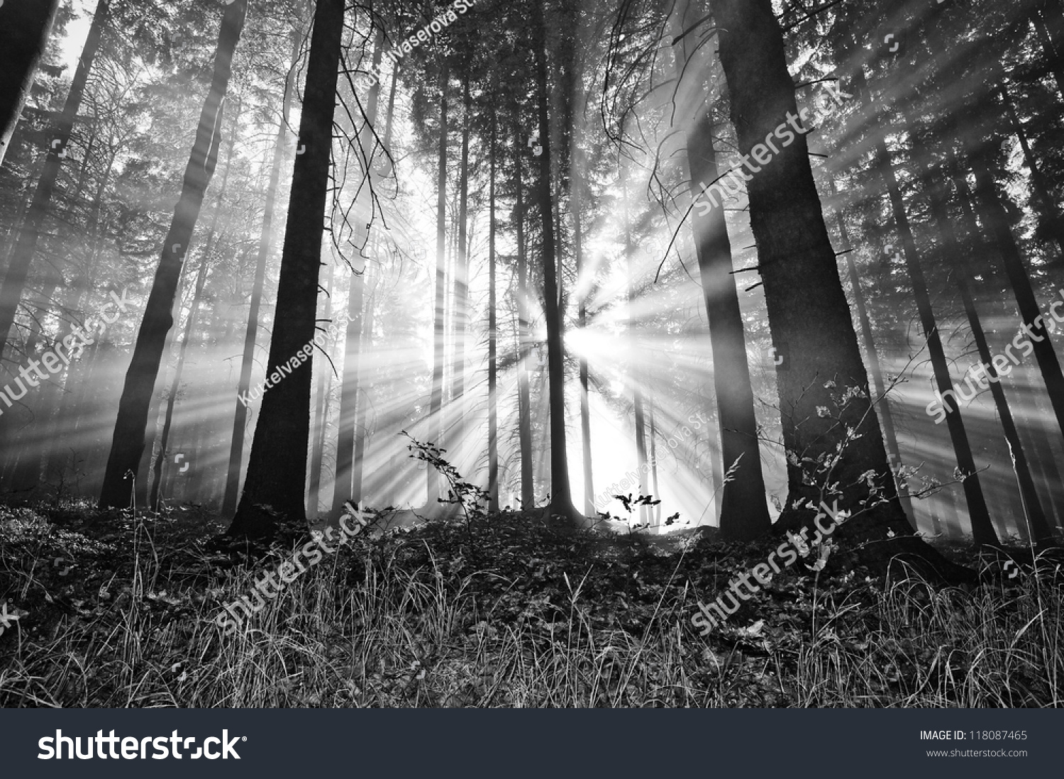 sunrise in a forest #118087465
