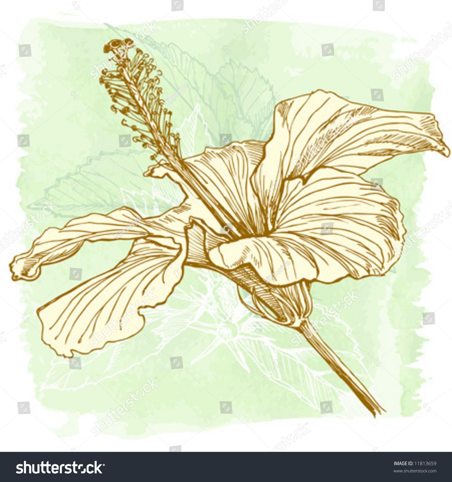 Hibiscus flower vector hand draw stock vector 2018 11813659 hibiscus flower vector hand draw izmirmasajfo Choice Image