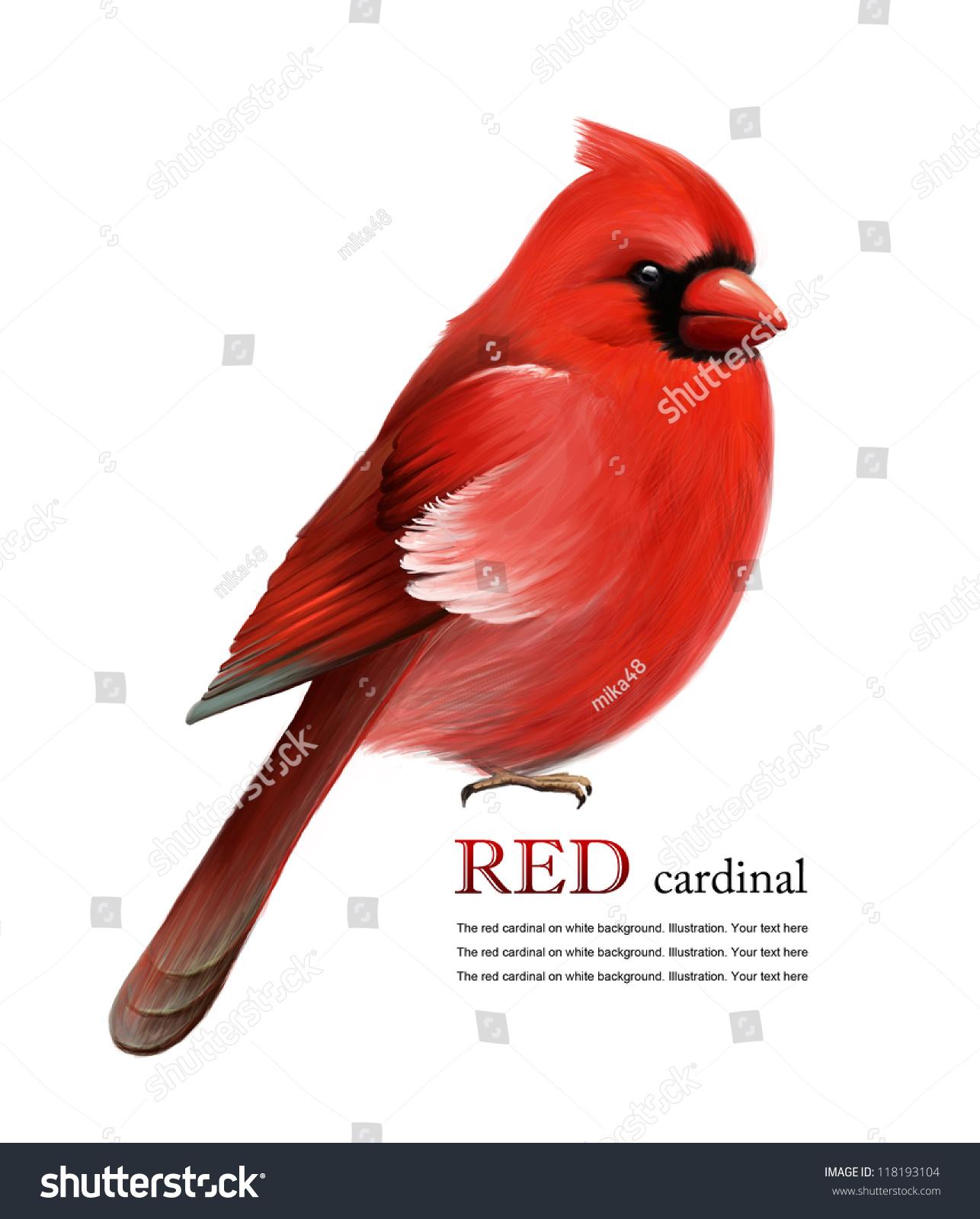 Red Cardinal On White Background Illustration Stock Illustration