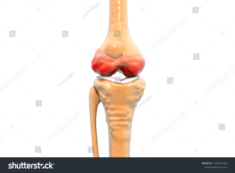 Anatomy Human Knee Joint 3 D Illustration Stock Illustration