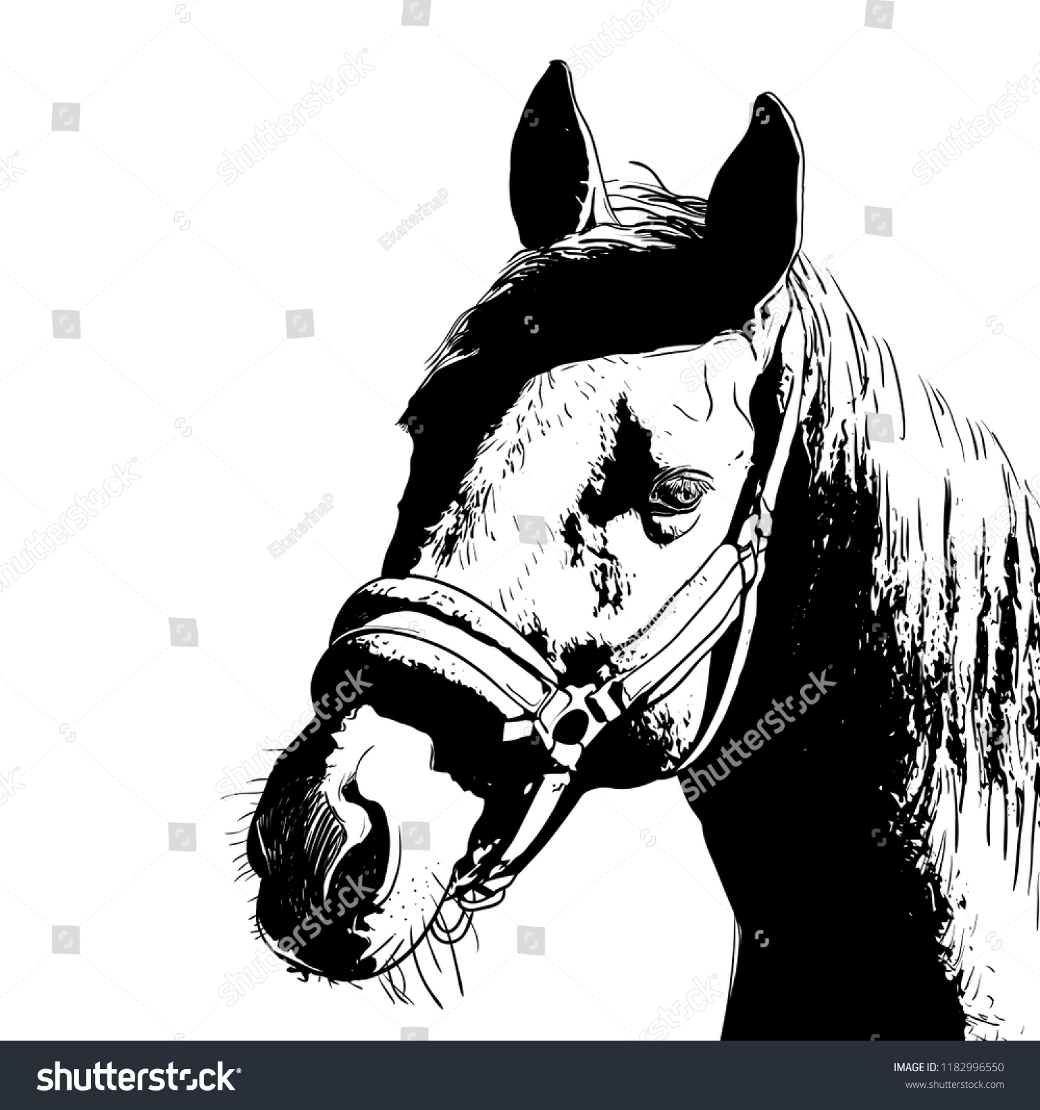 Horse Portrait Bridle On Head Snaffle Stock Vector Royalty Free 1182996550