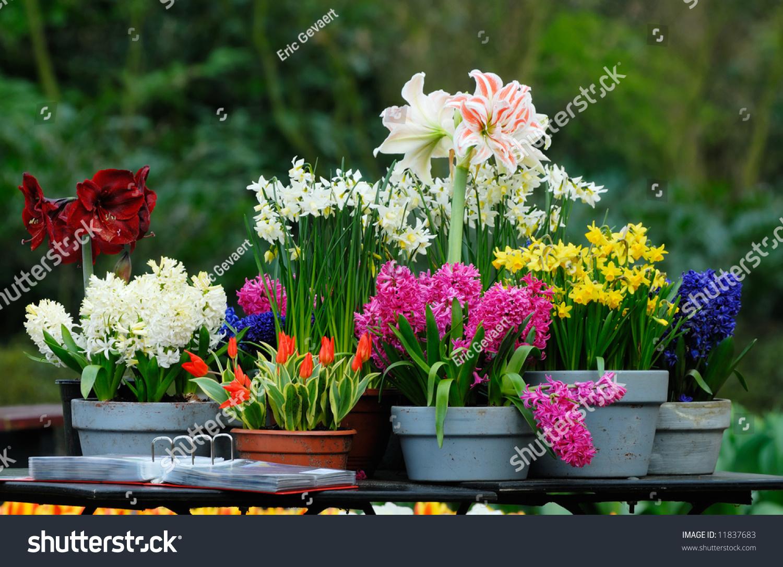 Beautiful Garden Flowers Spring Stock Photo Edit Now Shutterstock