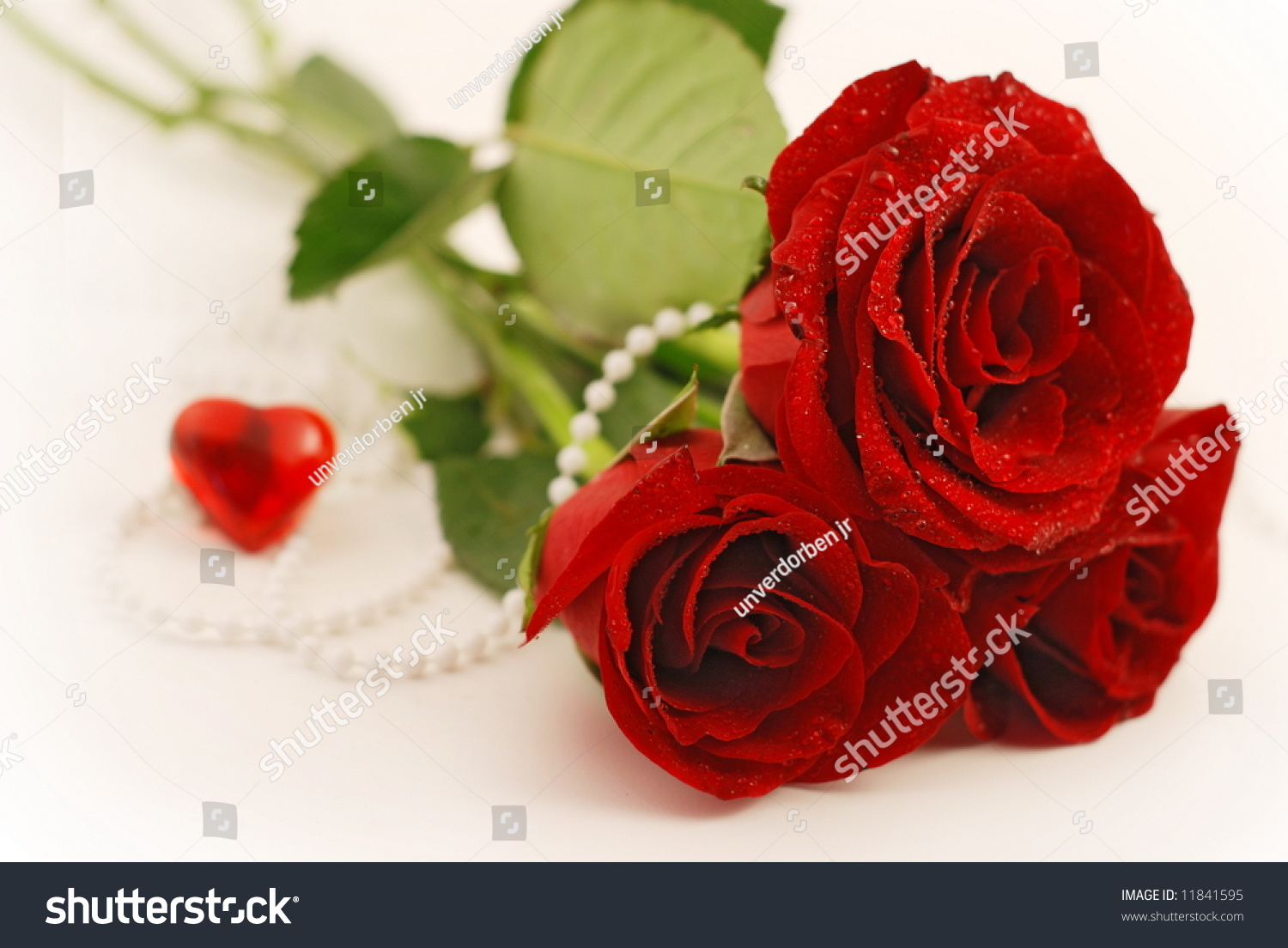 Beautiful Red Roses On A White Background With Heart And ...