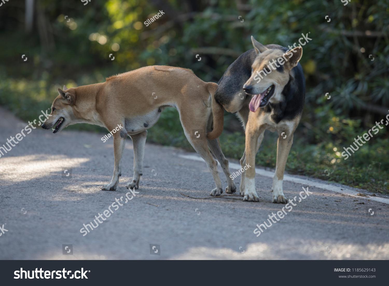 Dog sex Animal Sex