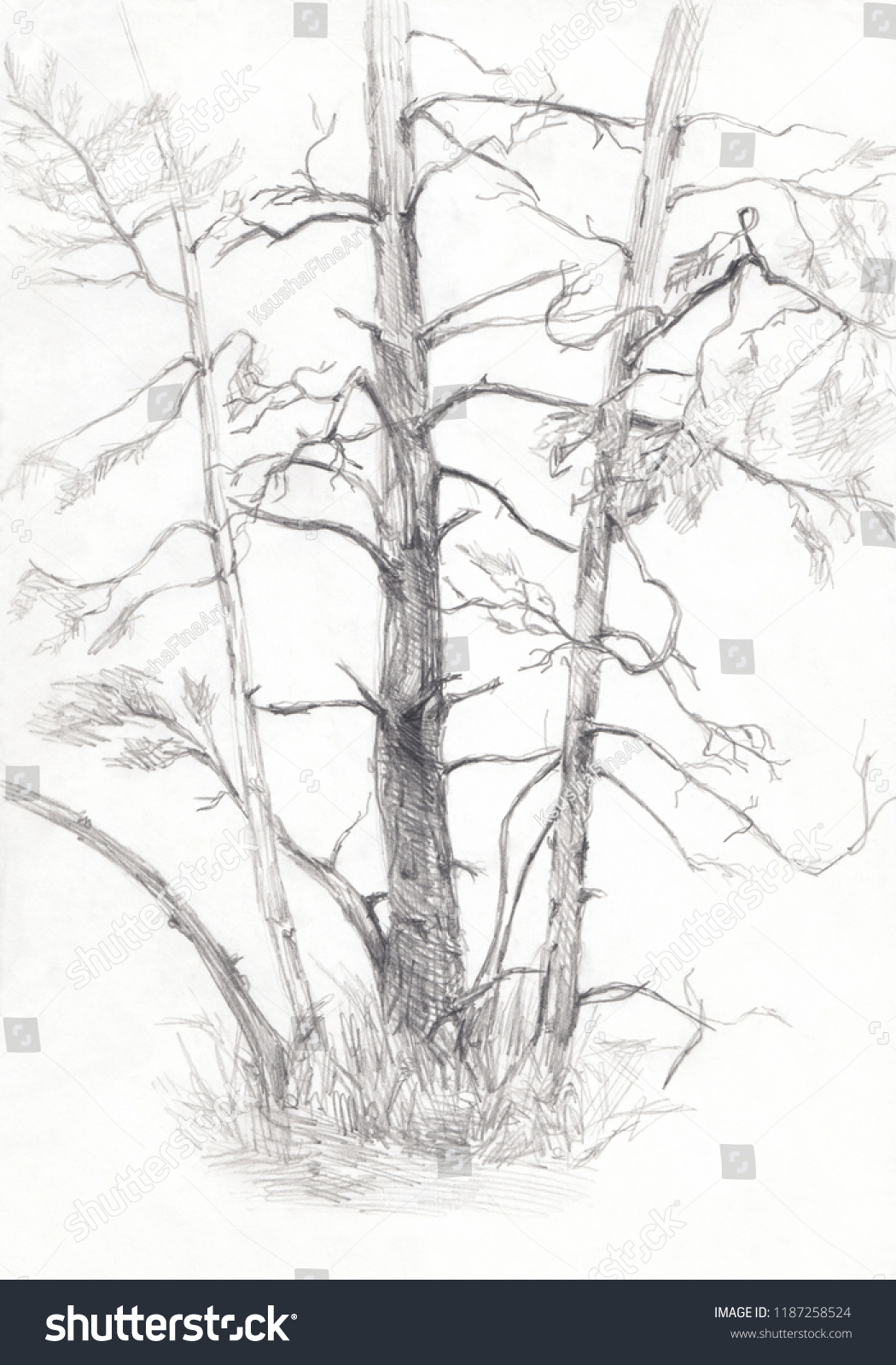 Trees pencil sketch white and black summer forest drawing pines sketch hand drawing