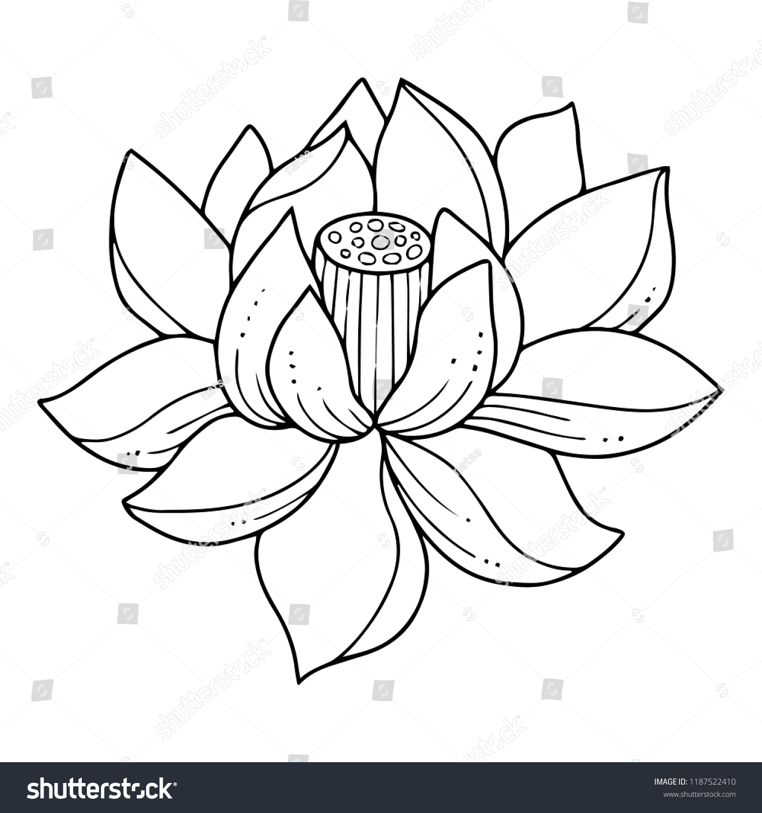Water Lily Flower Outline Topsimages