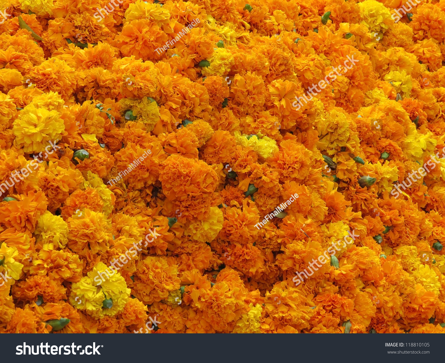 A Background Of Bright Colored Marigold Flowers In Yellow And Orange