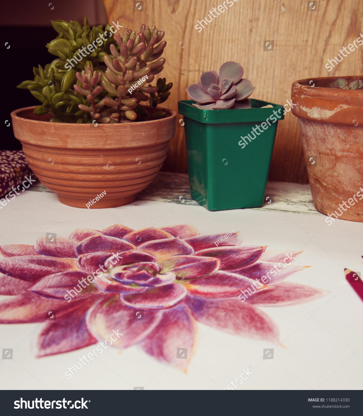 Pots Succulents Drawing Colored Pencils Stock Photo Edit Now 1188214330